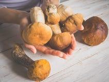 在白色木桌上的狂放的便士小圆面包 收获秋天可食的蘑菇 库存照片