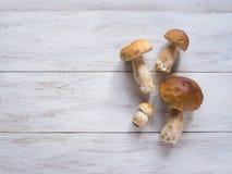在白色木桌上的狂放的便士小圆面包 收获秋天可食的蘑菇 免版税库存图片