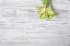 在白色木桌上的绿色水芋百合 免版税库存照片