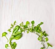在白色木桌上的绿色草本 库存照片