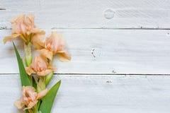 在白色木桌的嫩虹膜花 免版税库存图片