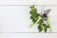 在白色木的新的绿色剪枝夹 顶视图 免版税图库摄影