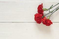 在白色木背景的三支红色康乃馨 库存图片