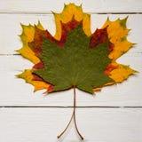 在白色木背景的三片秋天槭树叶子 图库摄影