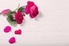 在白色木背景的两朵玫瑰 免版税库存照片