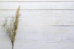 在白色木背景的干燥花,墙纸 库存照片