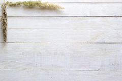在白色木背景的干燥花,墙纸 库存图片