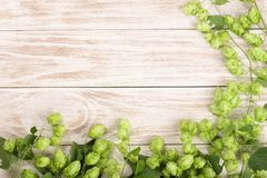 在白色木背景的新鲜的绿色啤酒花球果树 啤酒生产的成份 与拷贝空间的顶视图您的文本的 库存图片
