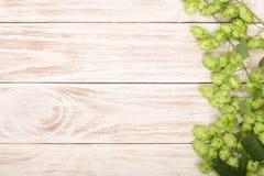 在白色木背景的新鲜的绿色啤酒花球果树 啤酒生产的成份 与拷贝空间的顶视图您的文本的 免版税图库摄影