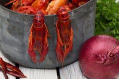 在白色木背景的新鲜的蒸的小龙虾 土气样式 杂志的盖子 海鲜菜单 免版税库存照片
