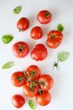 在白色木背景的新鲜的蕃茄 库存图片
