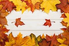 在白色木背景的槭树叶子 秋天概念查出的白色 免版税库存照片