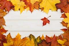 在白色木背景的槭树叶子 秋天概念查出的白色 库存照片