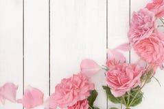 在白色木背景的浪漫桃红色玫瑰 免版税库存图片