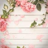 在白色木背景的浪漫桃红色玫瑰 免版税库存照片