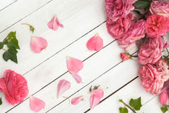 在白色木背景的浪漫桃红色玫瑰 免版税图库摄影