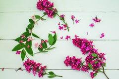 在白色木背景的淡紫色花 名列前茅vi 库存照片
