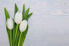 在白色木背景的白色郁金香 免版税库存图片