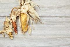 在白色木背景的秋天印第安玉米 免版税图库摄影