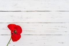在白色木背景的红色鸦片花为与拷贝空间的记忆天 图库摄影