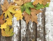 在白色木背景的美丽的秋叶 库存照片