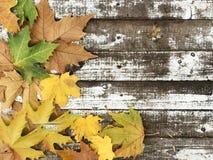 在白色木背景的美丽的秋叶 免版税库存照片