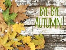 在白色木背景的美丽的秋叶 库存图片