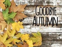 在白色木背景的美丽的秋叶 免版税库存图片