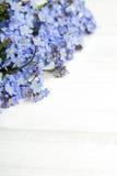 在白色木背景的蓝色花框架 免版税库存照片