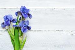 在白色木背景的蓝色虹膜花 免版税库存照片
