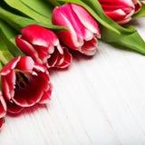 在白色木背景的郁金香花束, 免版税库存照片