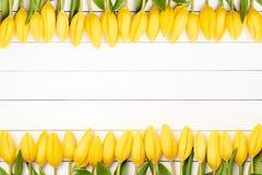 在白色木背景的黄色郁金香边界 复制空间,上面 库存图片