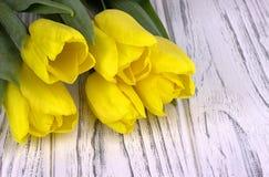在白色木背景的黄色春天郁金香 安置文本 妇女天 3月8日 免版税图库摄影