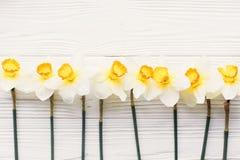 在白色木背景顶视图的美丽的新鲜的黄水仙 H 免版税图库摄影