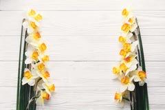 在白色木背景顶视图的美丽的新鲜的黄水仙 H 免版税库存照片