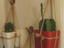 在白色木门-葡萄酒庭院想法的垂悬的仙人掌 免版税图库摄影