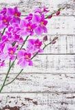 在白色木头的兰花 免版税图库摄影