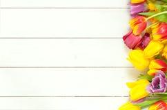 在白色木头的明亮的郁金香 免版税图库摄影