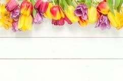 在白色木头的郁金香 背景 免版税图库摄影