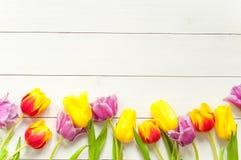 在白色木头的郁金香 免版税库存照片