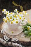 在白色杯子的春黄菊 免版税库存照片