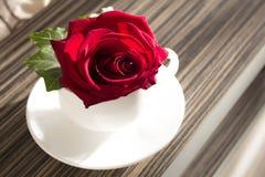 在白色杯子的红色玫瑰 库存照片