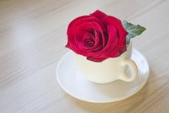 在白色杯子的红色玫瑰 免版税库存图片