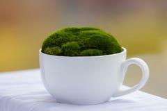 在白色杯子的绿色青苔在色的背景 图库摄影