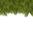在白色板料的冷杉分支 抽象空白背景圣诞节黑暗的装饰设计模式红色的星形 免版税图库摄影