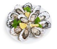 在白色板材的十二只牡蛎 免版税库存图片