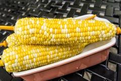 在白色板材的煮沸的玉米棒子 免版税图库摄影