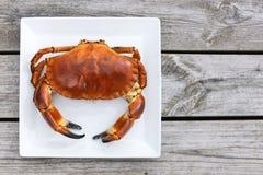 在白色板材的煮熟的螃蟹顶视图 图库摄影