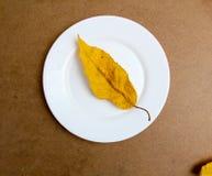在白色板材的秋天叶子 木背景 图库摄影