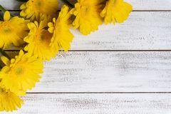 在白色板条背景的黄色雏菊与拷贝空间 免版税库存照片